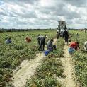 """Caporalato. La Uila Trapani palude al blitz della Guardia di Finanza - Macaddino: """"L'Inps adotti lo strumento della rete per la legalità in agricoltura"""""""