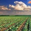 Agricoltura. Altra tegola sulla testa degli agricoltori - Imu agricola batte cassa in corso d'opera
